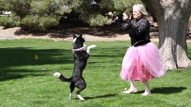 5 Things You Can Enjoy Doing with Dogs